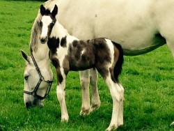 We would like to welcome our first coloured foal.