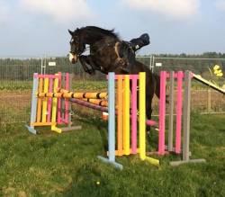 Weston Dazzler Visits Wellow Equestrian Centre