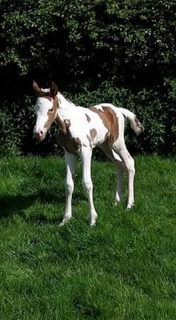 New foal Born