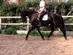 Jumbo Moon River Sold to a lovely home 1-12-2014