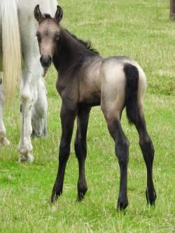 Linni's last foal