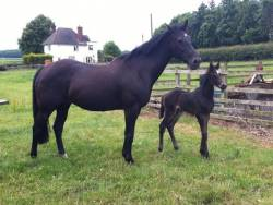 Foal Number 2