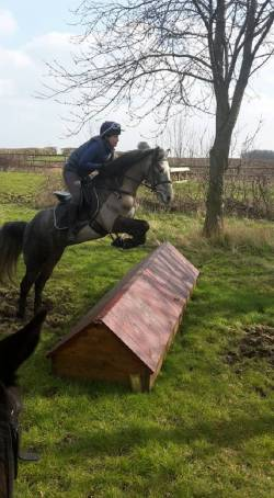 Videos of the horses that are for sale