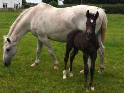 Foal Number 1